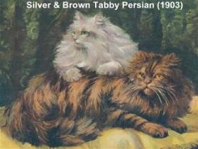 silver & brown tabby persian (1903)