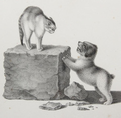 Gottfried Mind (1768 - 1814) cat and dog